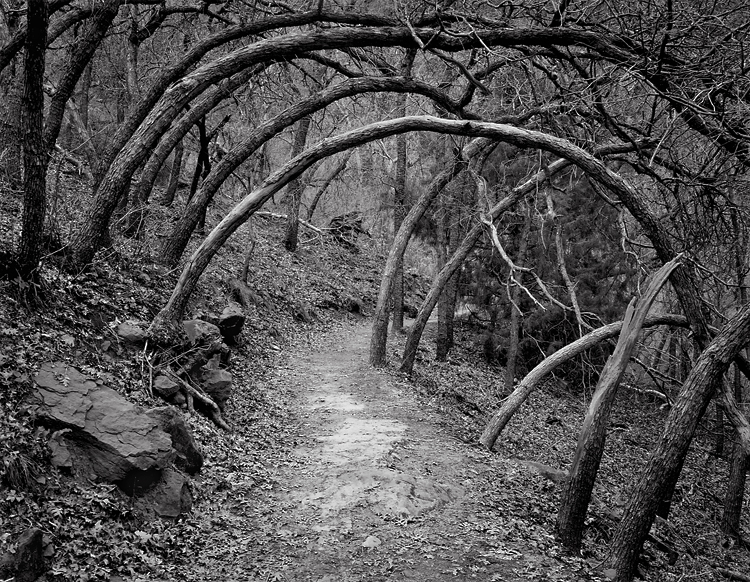 Oak Forest Trail, 1978. Zion National Park, Utah