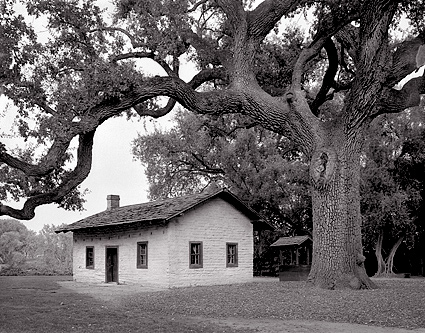 Oak Tree, Ide Adobe, California. Black and white photograph