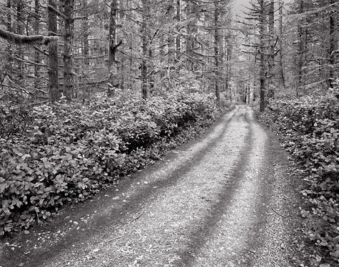 Road, Rain Forest. North Cascades Foothills, Washington. Limited edition black and white photograph