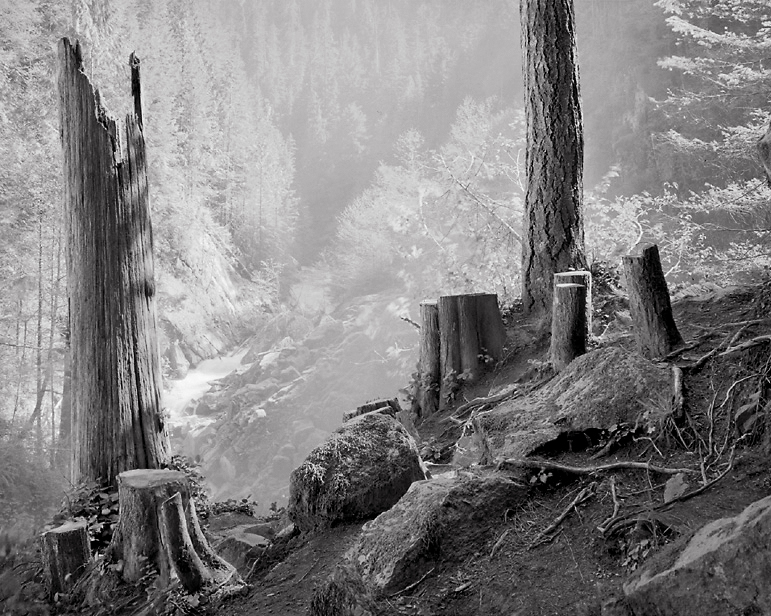 Stumps and Mist, 1999. North Cascades National Park, Washington