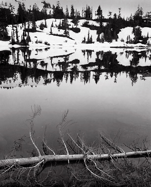 Branches and Lake, Washington. Black and white photograph