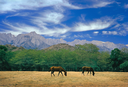 Horses and Mt. Whitney. Lone Pine, California. Color Photograph