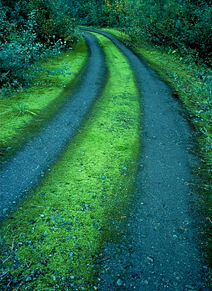 Road and Moss. Mt. Baker National Forest, Washington