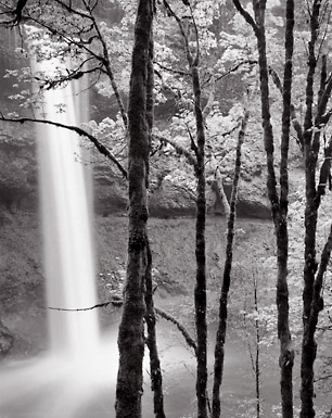 South Falls and Trees, Oregon. Black and white photograph