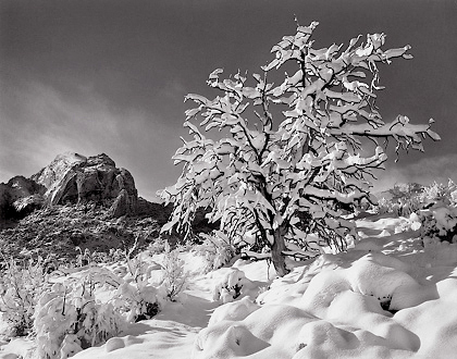 Trailside Snow BW Southern Utah Photo Workshop
