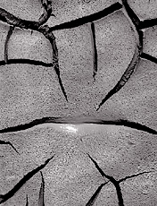 Mud Detail, Arizona. Black and white photograph
