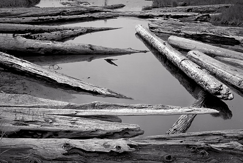 Logs and Pond, 2005. Sequim, Washington