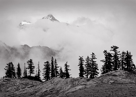 Treeline, Clearing Storm, 2004. North Cascades National Park, Washington